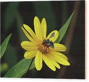Lunch At Coreopsis Wood Print by Sandra Anderson