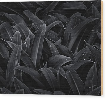 Lush Monochrome Wood Print by Tim Nichols