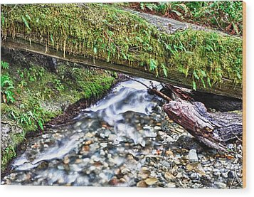 Wood Print featuring the photograph Lush-ous by Kevin Munro