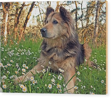 Wood Print featuring the photograph Lying In The Daisys by Tyra  OBryant