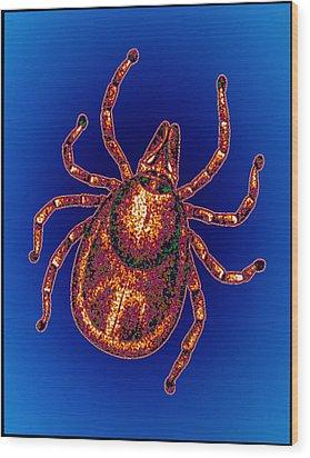 Lyme Disease Tick Wood Print by Pasieka