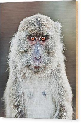 Macaque Portrait Wood Print by MotHaiBaPhoto Prints