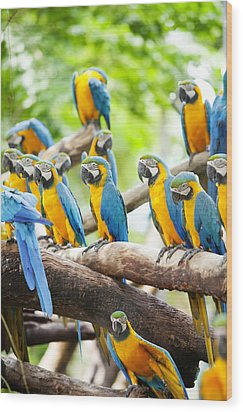 Macaw Wood Print by Anek Suwannaphoom