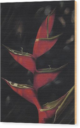 Macaw Flower - Heliconia Bihai Wood Print