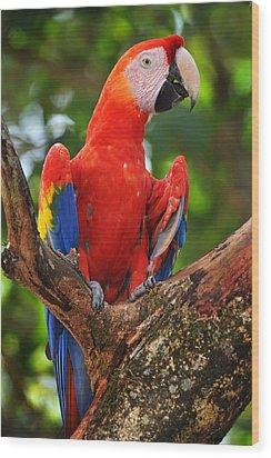 Macaw Of Copan Wood Print by Paul Bratescu
