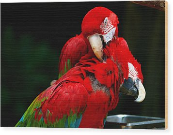 Macaws Wood Print by Paul Ge