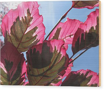 Macro Leaves Wood Print by Sean Seal