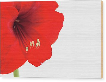 Macro Of Red Amaryllis With Copy Space Wood Print by Ursula Alter