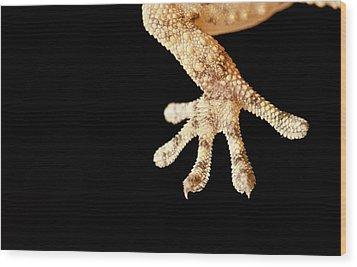 Macro Reptil Wood Print by Izlemus