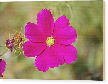 Magenta In Bloom Wood Print by Mary McAvoy