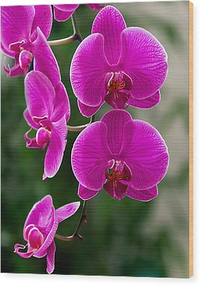 Magenta Orchid Medley Wood Print by Anna Rumiantseva