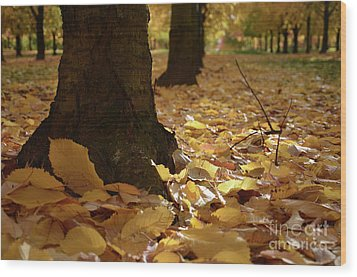 Magic Autumn  Wood Print by Bruno Santoro