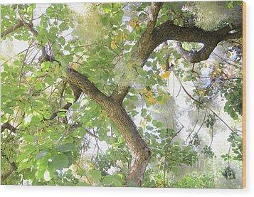 Magic Bush Wood Print by Bruno Santoro