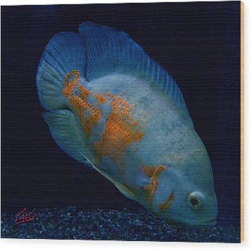 Magic Fish Name Oscar  Wood Print by Colette V Hera  Guggenheim