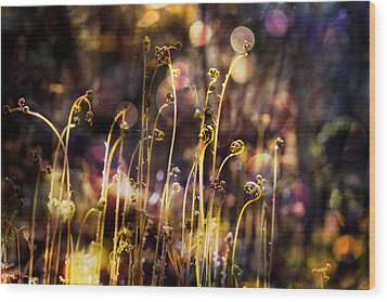 Magic Of Spring Wood Print by Michele Cornelius