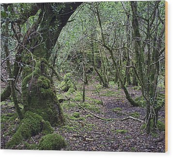 Wood Print featuring the photograph Magical Forest by Hugh Smith