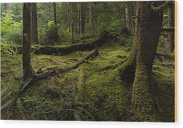 Magical Forest Wood Print by Mike Reid