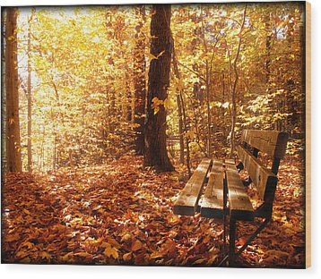 Magical Sunbeams On The Best Seat In The Forest Wood Print by Chantal PhotoPix