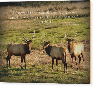 Magnificent Bull Elk Psalm 50 Wood Print by Cindy Wright