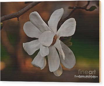 Wood Print featuring the photograph Magnolia Bloom by Barbara McMahon