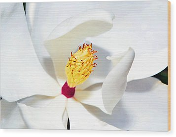 Magnolia Bloom Wood Print by Susan Leggett