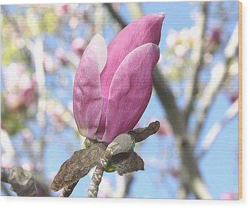 Magnolia Bud Wood Print