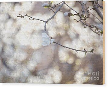 Wood Print featuring the photograph Magnolia Dream by Susan Cole Kelly