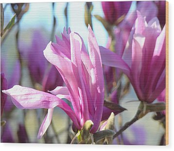 Magnolia Flowers Art Prints Pink Magnolia Tree Blossoms Wood Print by Baslee Troutman