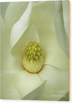 Wood Print featuring the photograph Magnolia Grandiflora by Deborah Smith