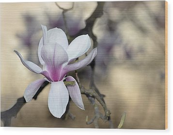 Magnolia One Wood Print