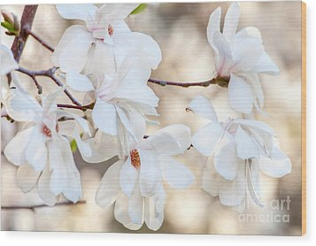 Wood Print featuring the photograph Magnolia Spring by Susan Cole Kelly
