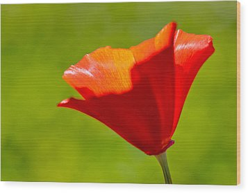 Mahogany California Poppy IIi Wood Print by Heidi Smith