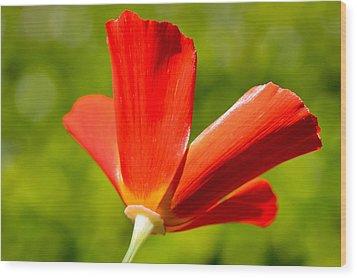 Mahogany California Poppy Iv Wood Print by Heidi Smith
