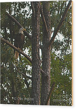 Majestic Bald Eagle Wood Print by Clayton Bruster