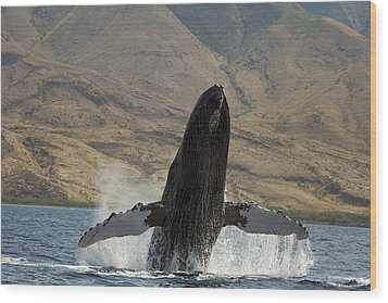 Majestic Breaching Whale Wood Print by Dave Fleetham