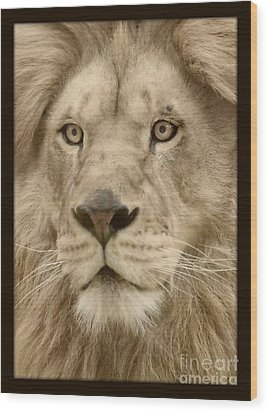 Majestic Lion Wood Print by Megan Wilson
