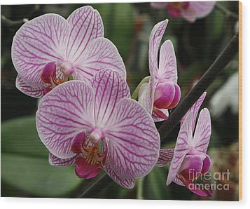 Majestic Orchids Wood Print by Carol Groenen