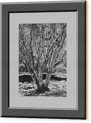 Majestic Tree  Lv Wood Print by Daryl Macintyre