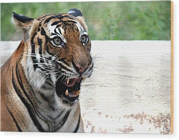 Wood Print featuring the photograph Make My Day by Kathy  White