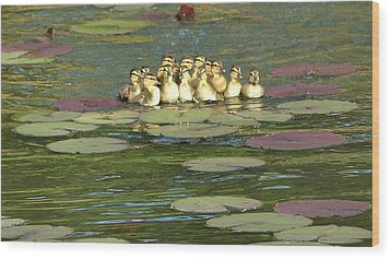 Wood Print featuring the photograph Make Way For Ducklings by Mary Zeman