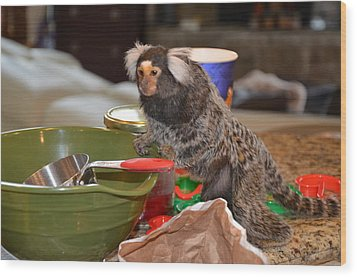 Making Cookies Chewy The Marmoset Wood Print by Barry R Jones Jr