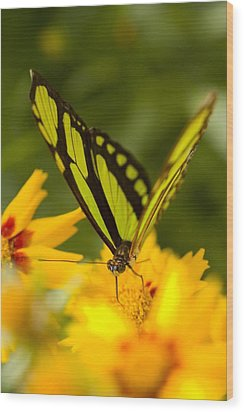 Malachite Butterfly On Flower Wood Print by Craig Tuttle