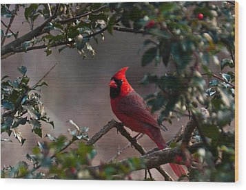 Male Cardinal Wood Print by Ron Smith