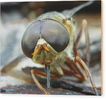 Male Horse Fly Wood Print by Chad and Stacey Hall