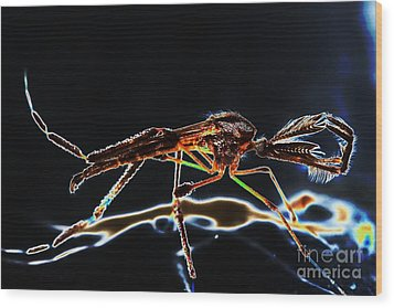 Male Mosquito Enhanced Wood Print by Lynda Dawson-Youngclaus