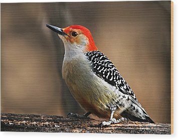 Male Red-bellied Woodpecker 4 Wood Print by Larry Ricker
