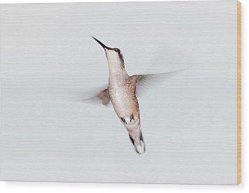 Male Ruby-throated Hummingbird Wood Print by Jim McKinley