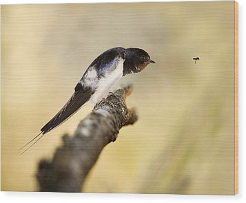 Male Swallow Wood Print by Power And Syred