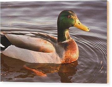 Mallard Duck At Sunset Wood Print by Ann Murphy