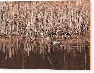 Wood Print featuring the photograph Mallard Duck by Josef Pittner